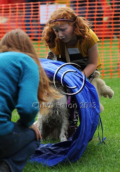 Dog agility show 45