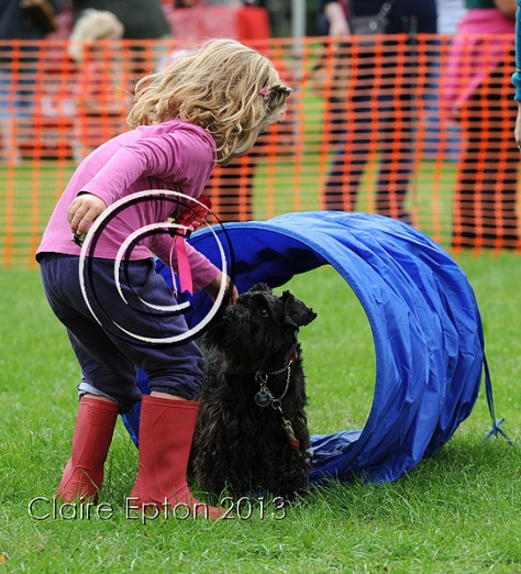 Dog agility show 43