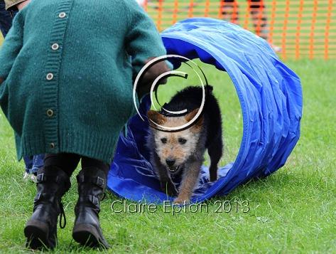 Dog agility show 35